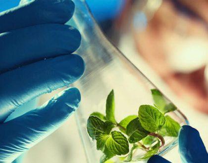 ارائه یک مدل جدید اقتصادی به کمک زیستفناوری امکانپذیر است